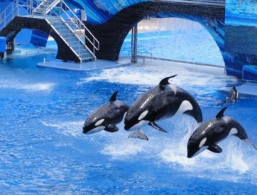 PASAPORTE SEA WORLD ORLANDO DE 3 VISITAS