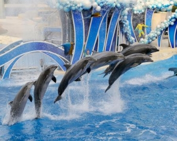 PARQUES DE SEA WORLD ORLANDO CON VISITAS ILIMITADAS