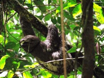 ECOAMAZONIA LODGE CON TOUR ECOPARAISO COMPLETO 5 DIAS